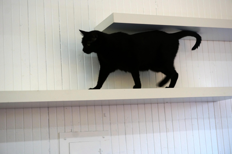 An agile cat at the Dancing Cat in San Jose, CA