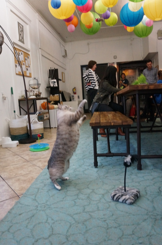 Playful cat at the Dancing Cat